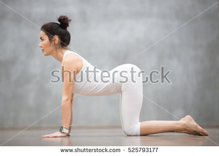 cat pose1  yogarsutra
