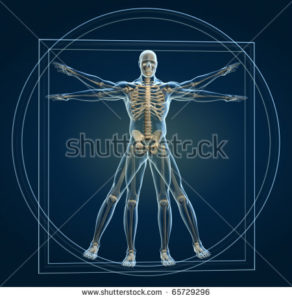 """Yoga and skeletal system"