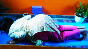 Ashtanga Namaskar aka Eight Limb Salutation