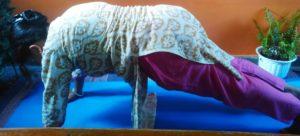 Dandasana aka Plank Pose in Surya Namaskar