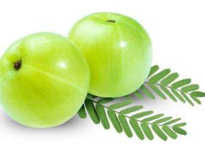 Amla a winter fruit